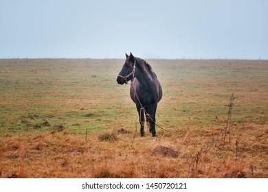 Brown horse in autumn scene