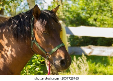 brown horse with a black mane on the background of a wooden fence - Shutterstock ID 2037728765
