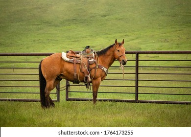 Brown horse with a black mane and tail stands next to a fence in a lush green pasture wearing a western style saddle.