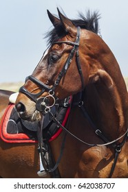 brown horse with a black mane and a white blaze on his head