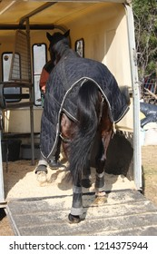 Brown horse with blanket walking up ramp into horse trailer, rear view.