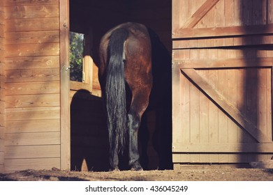 brown horse buttocks in barn