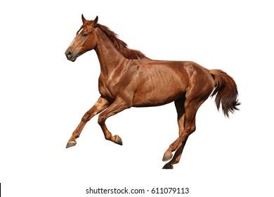 Horses Running Images, Stock Photos & Vectors Shutterstock