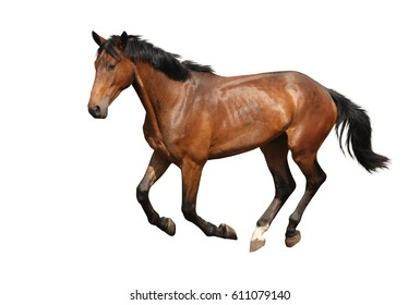1000+ Horse White Background Stock Images, Photos & Vectors ...