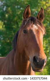 Brown horse close up in nature