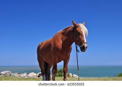 Brown horse in the coast of Cabo Polonio, Rocha, Uruguay