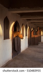 Brown horse extending his head out of stable opening while warm orange ray of sun illuminates his head.