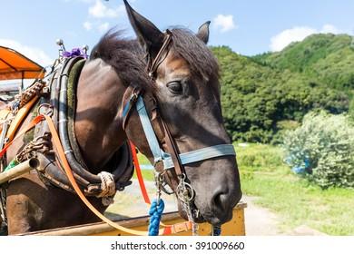 Brown horse in farm
