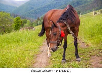 A brown horse in a field.
