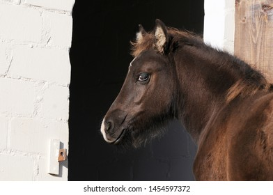 brown horse foal standing in front of stable