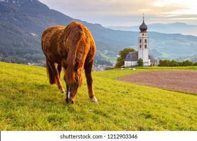 Brown horse graze by the tyrolean church at sunset