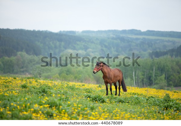 brown horse grazing in a field of flowers. a bright sunny day.