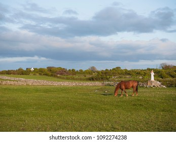 Brown horse grazing grass in a green field, Irish dry stone wall in the background.