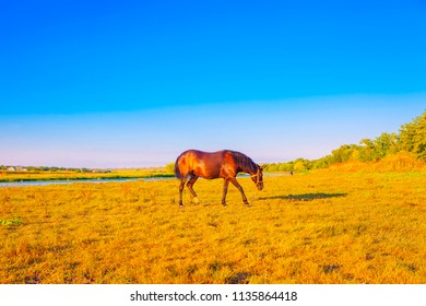 brown horse grazing on meadow near river