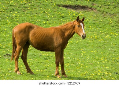 brown horse with green natural background full of yellow flowers