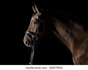a brown horse head with bridle against black background