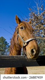 A brown horse looking over a split rail fence