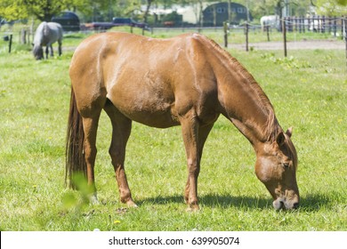 American Paint Mare Colt Horse On Stock Photo (Edit Now