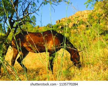 Brown horse on hillside meadow in Andalusian countryside