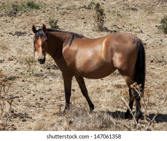 Brown horse on meadow under sunlight