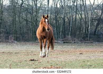 Brown horse on pasture