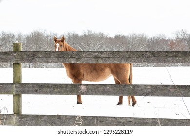 Brown horse peeks over a wooden fence in a snow-covered field.