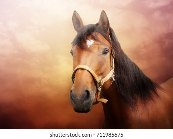 Brown horse portrait with colorful background