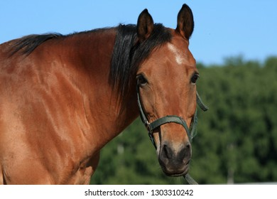Brown horse portrait on a sunny summer day