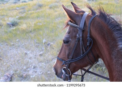 a brown horse portrait, from up.