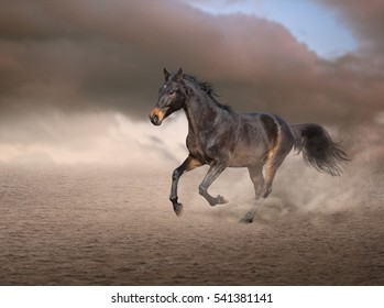 Brown horse running on sand on sky and smoke background