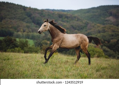 Brown horse running through green meadow while eating grass