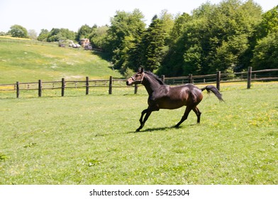 Brown horse runs across the field.