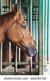 Brown horse in stable at the farm