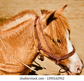 A brown horse standing around a place