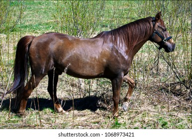 Brown Horse standing in the field