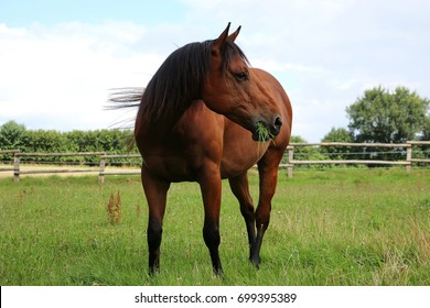 brown horse is standing on a paddock