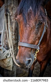 A brown horse standing in a stable on a farm.