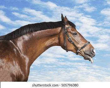a brown horse sticks his tongue out of the mouth