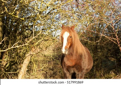 Brown Horse Surrounded By Bushes wide angle