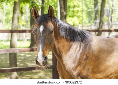 brown horse with a white spot on his head is standing next to a wooden fence