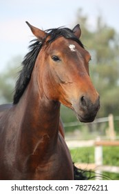 Brown horse with white star on forehead