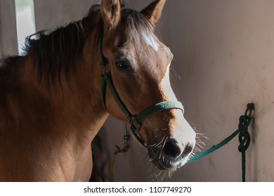 Brown horse at the window of a barn with sunlight