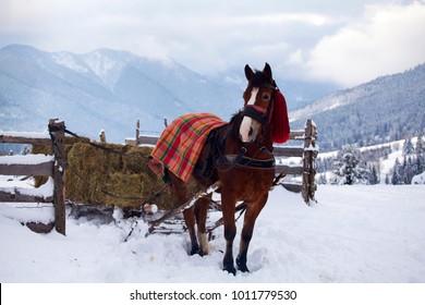 Brown horse in winter landscape