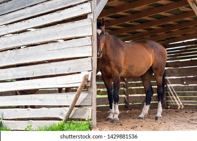 brown horse in wooden stable closeup