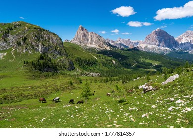 Brown horses graze in the mountains. Herd of horses grazing on a green meadow on the mountain slope, dolomites italy