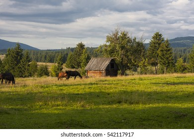 Brown horses are grazing on a beautiful mountain meadow in Transylvania, with a farm house and mountains in the background at sunset