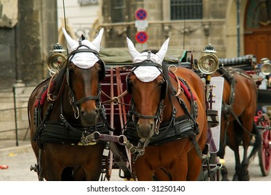 brown horses with harness and coach on a street