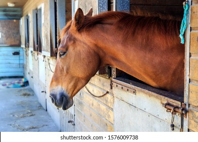 Brown horses standing alone in barn and looking out away from barn wooden window. Young horses in the stable. Close-up of a youngster.