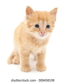 Brown kitten isolated on a white background.