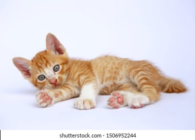The brown kitten lay down on the floor and look forward. The kitten look like the tiger kids. Has fluffy hair, fangs & sharp nails.